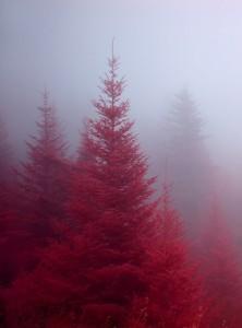 Rosso 2