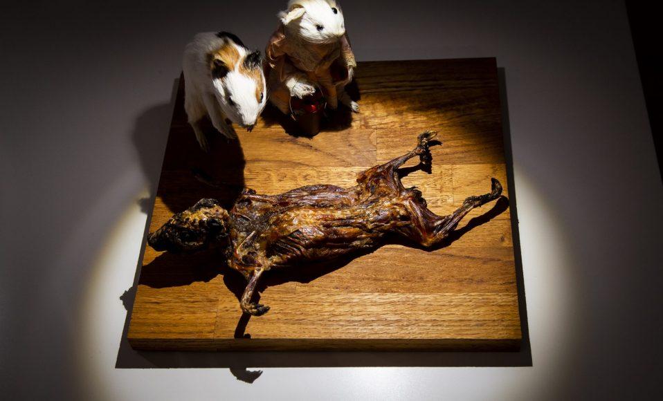 disgusting food museum