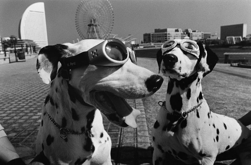 Elliott-Erwitt-Dogs-Yokohama-2003