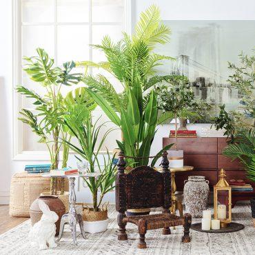 piante da interni